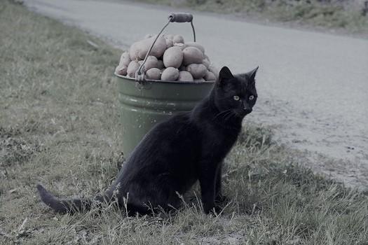 Православный_рассказ_Картошка