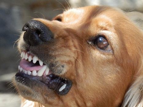 Православный РАССКАЗ Злая собака кусает только раз
