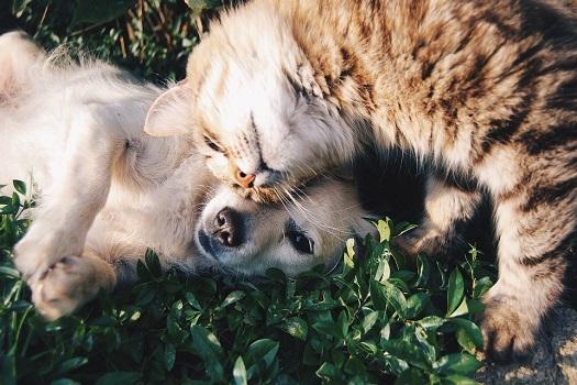 Кот_и_собака