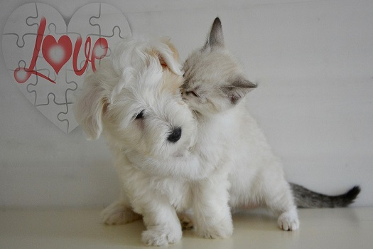 котенок_и_собака