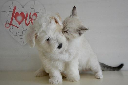 Сказка про котенка и собаку Булькина