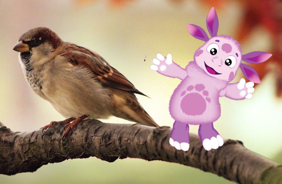 СКАЗКА Лунтик и бедная птичка
